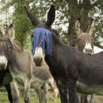 Les animaux experts-  Enseignants & formateurs