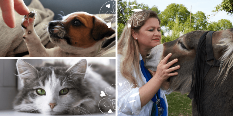 Approfondir la communication animale intuitive avec son animal