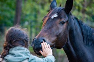 La Communication animale sur Radio Associations