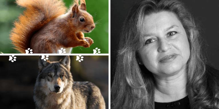 Développer la communication animale intuitive avec les animaux sauvages